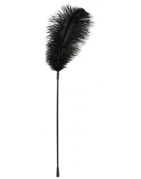 Black feather Bad Kitty
